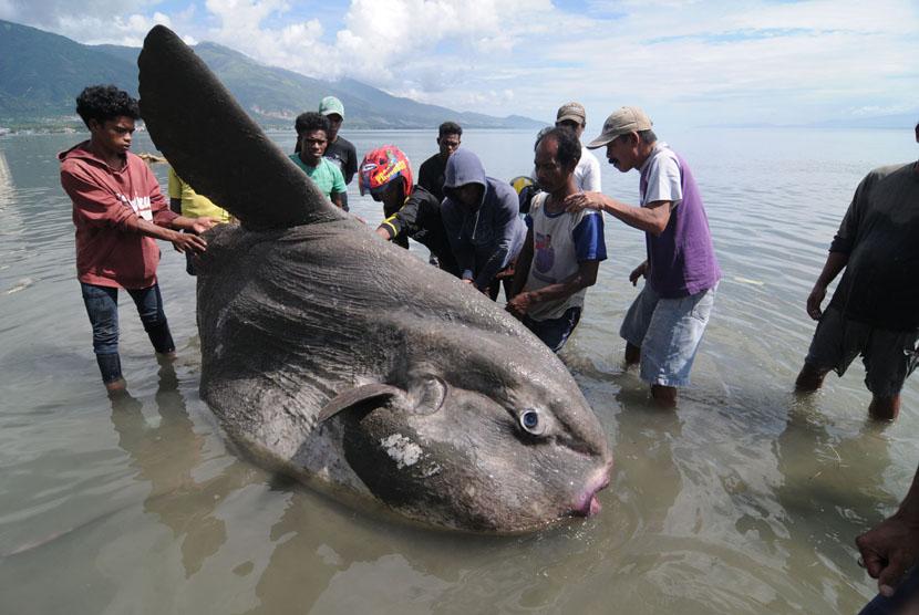 ikan langka Indonesia